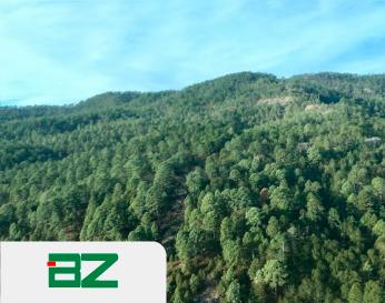 BZ Forest